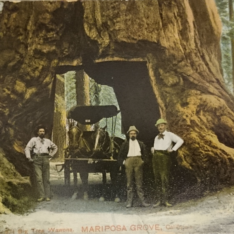 <em>371 Big Tree Wawona Mariposa, California</em>