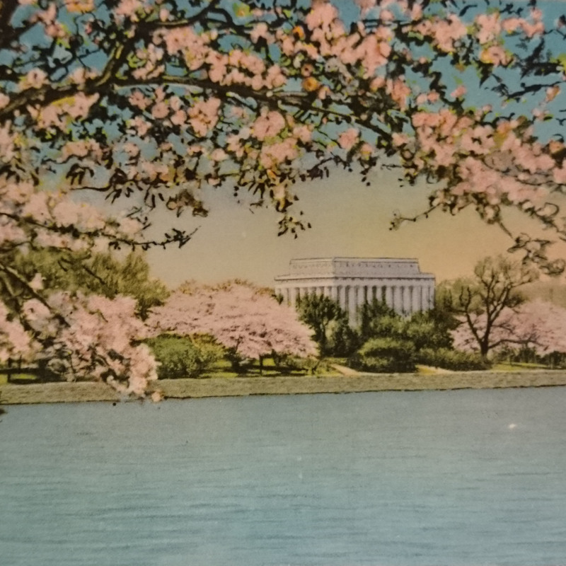 <em>The Lincoln Memorial and Japanese Cherry Blossoms</em>