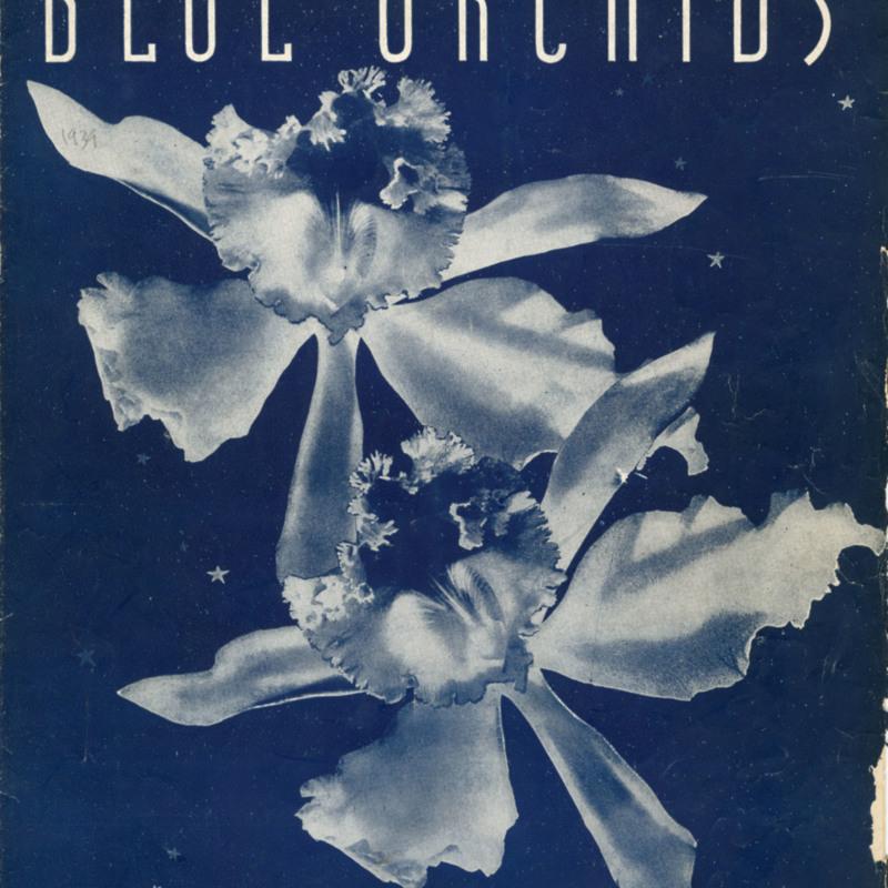 """""""Blue Orchids."""""""